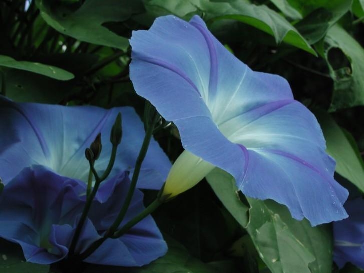 bonne nuit dans image bon nuit, jour, dimanche etc. normal_flowerc4