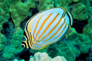 Saltwater Fish Quiz Fish Quiz How Much Trivia Do You